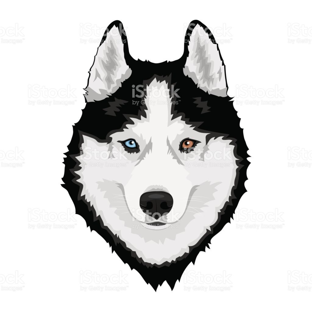 Black And White Siberian Husky With Multi Colored Eyes Hand Drawn