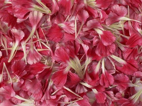 ♔  petals