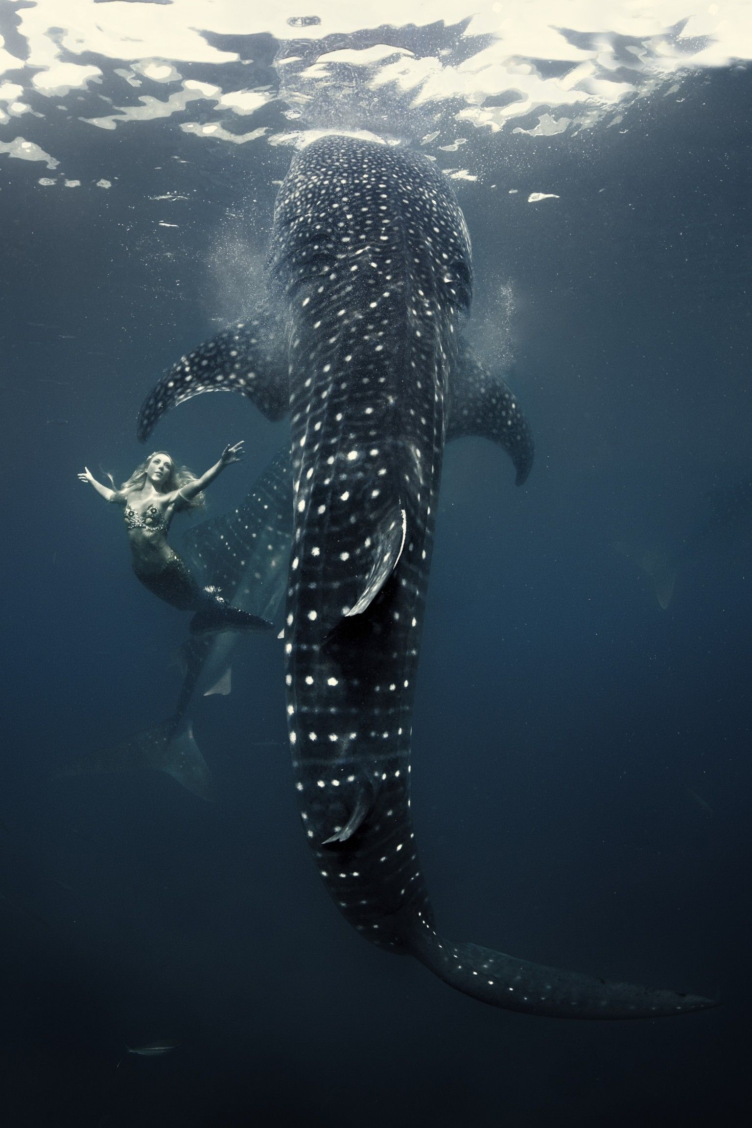 Real Life Mermaid Hannah Fraser With Whale Sharks Photo By Shawn Heinrichs