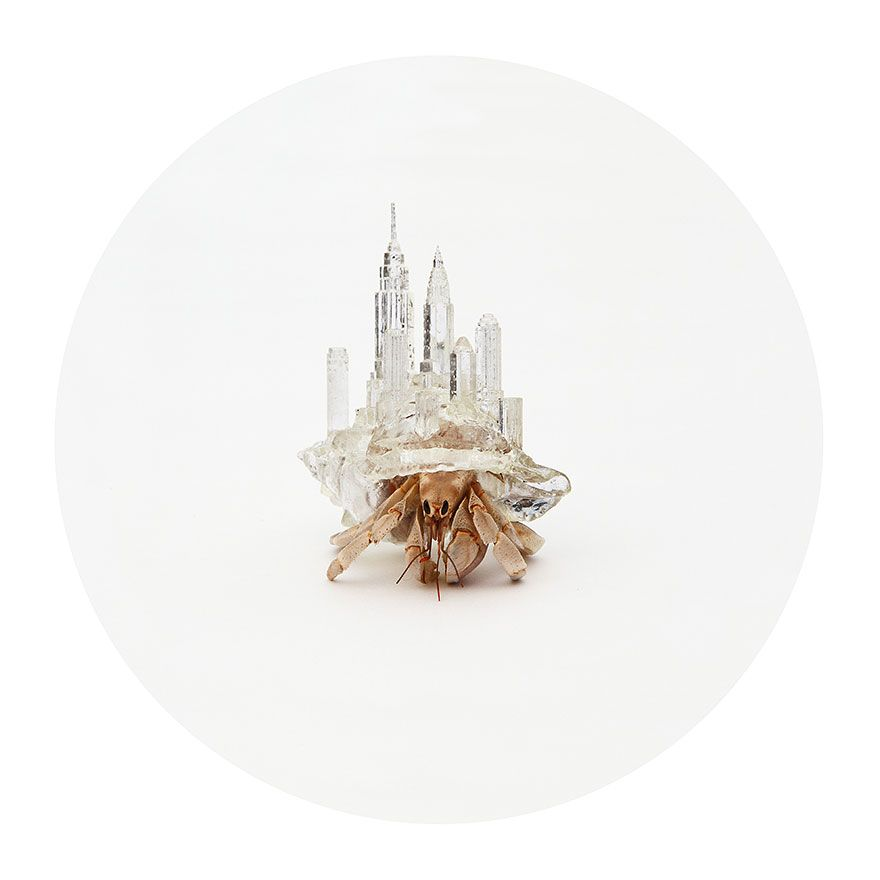 Este Artista Imprimió En 3D Caparazones Con Forma De Ciudad Para ...