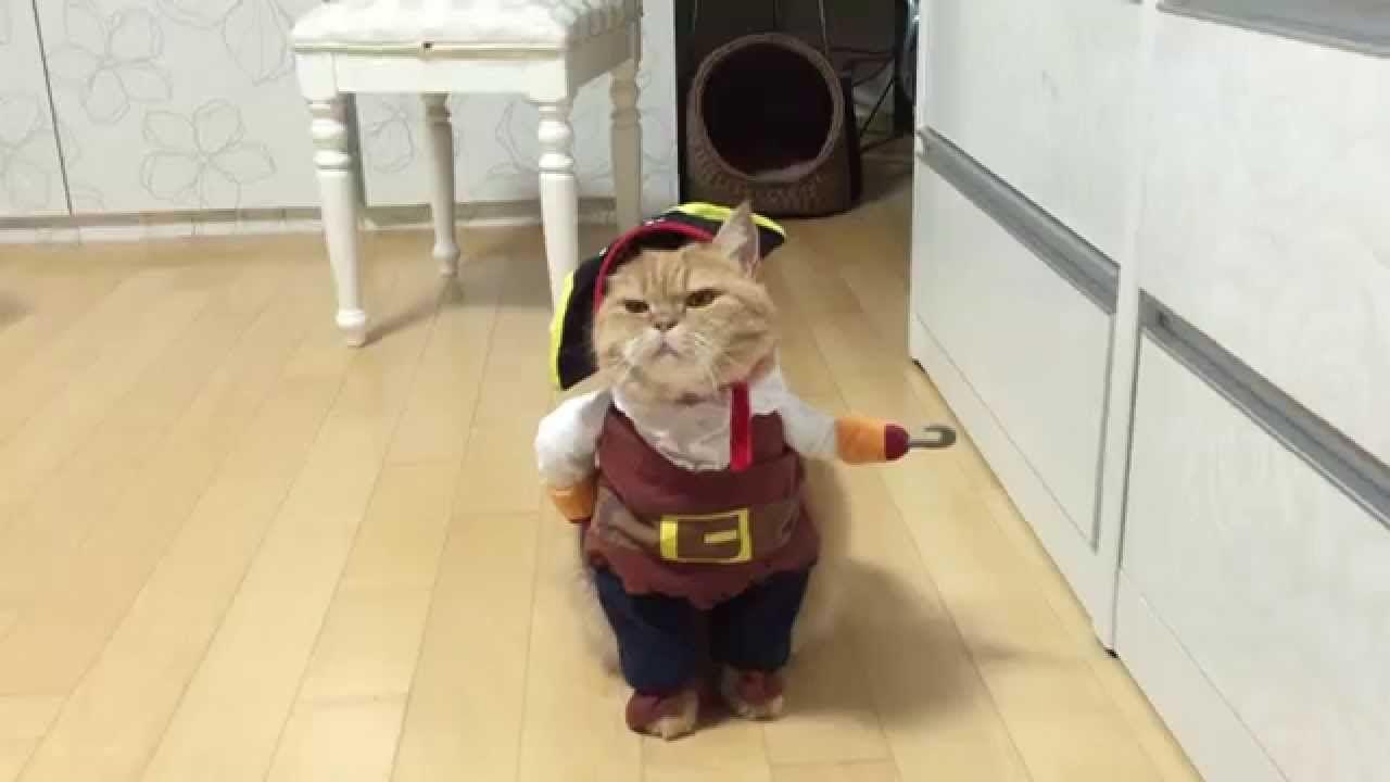 Cat costume lesbian