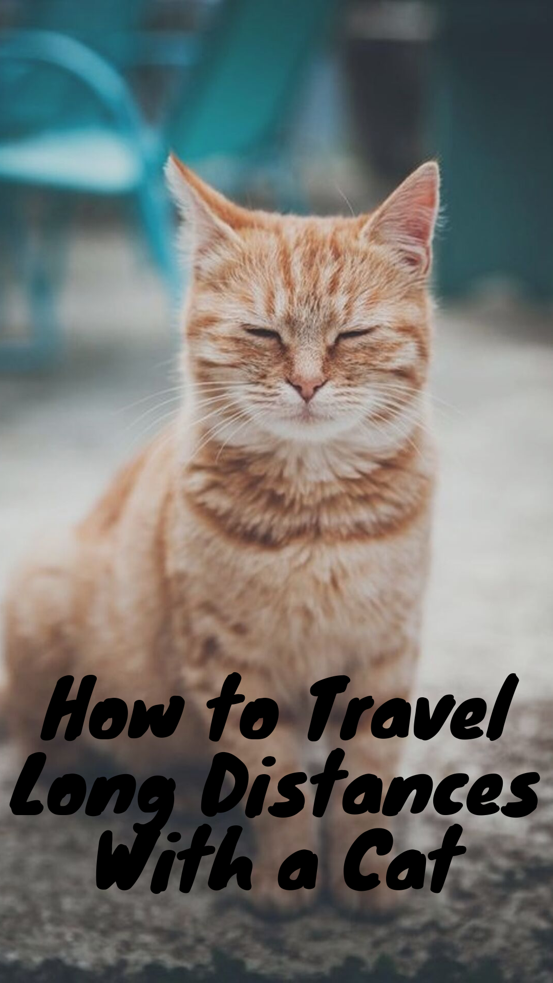7 Tips To Travel Long Distances With Cats Cats Cat Facts Funny Cats