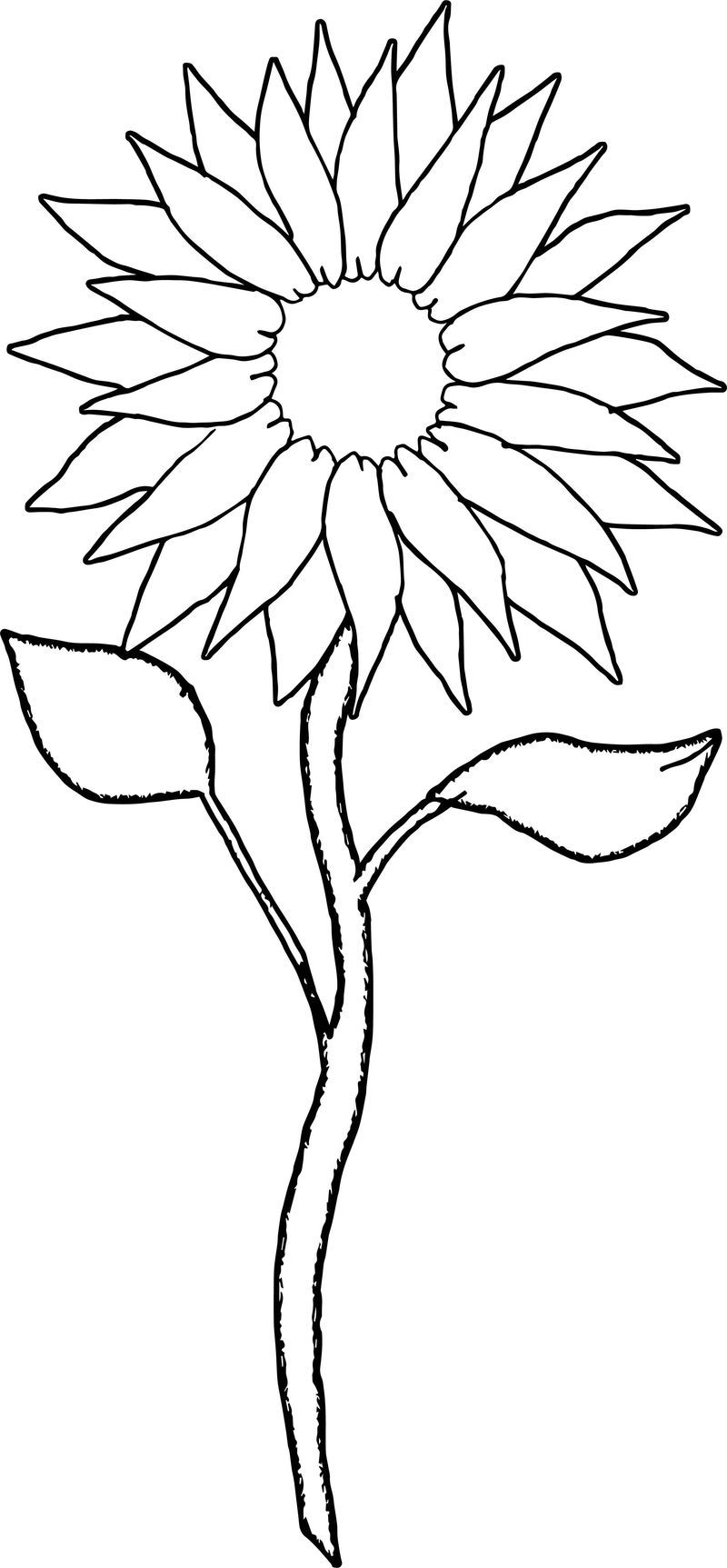 Sunflower Two Coloring Page Sunflower Coloring Pages Pokemon Coloring Pages Shape Coloring Pages