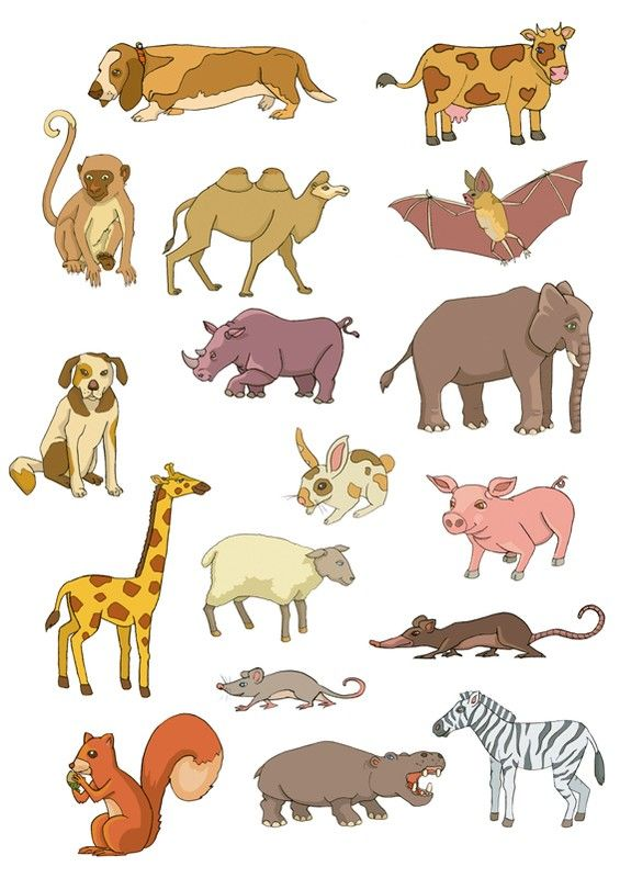 French Names For Young Animals