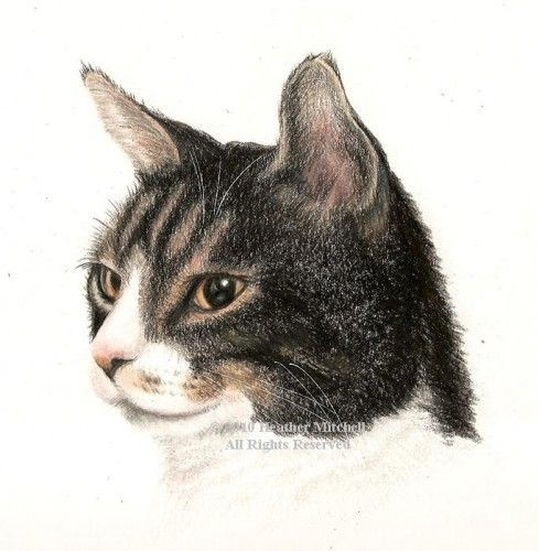 Color Pencil Drawing of Cat