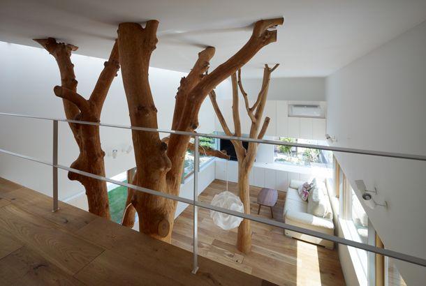家の中に木が生えた 天然木を活かすインテリア インテリアガーデン