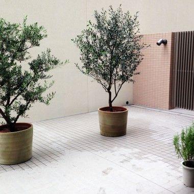 植物の持つ個性 器の持つスタイルから自分らしいfuga Greenをご紹介