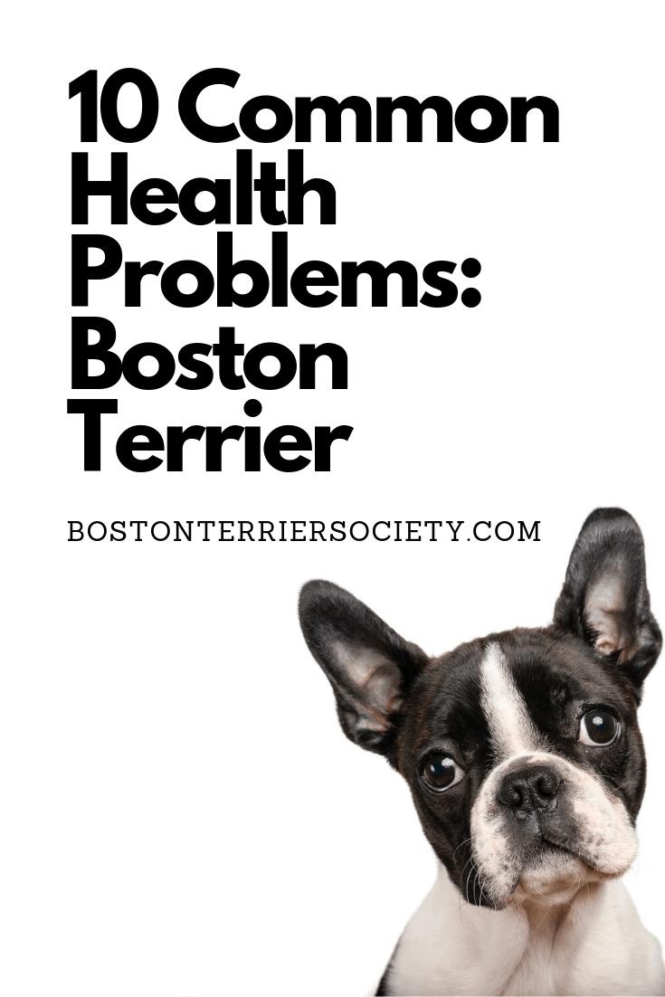 10 Common Boston Terrier Health Problems Boston Terrier Puppy Boston Terrier Names Boston Terrier Dog