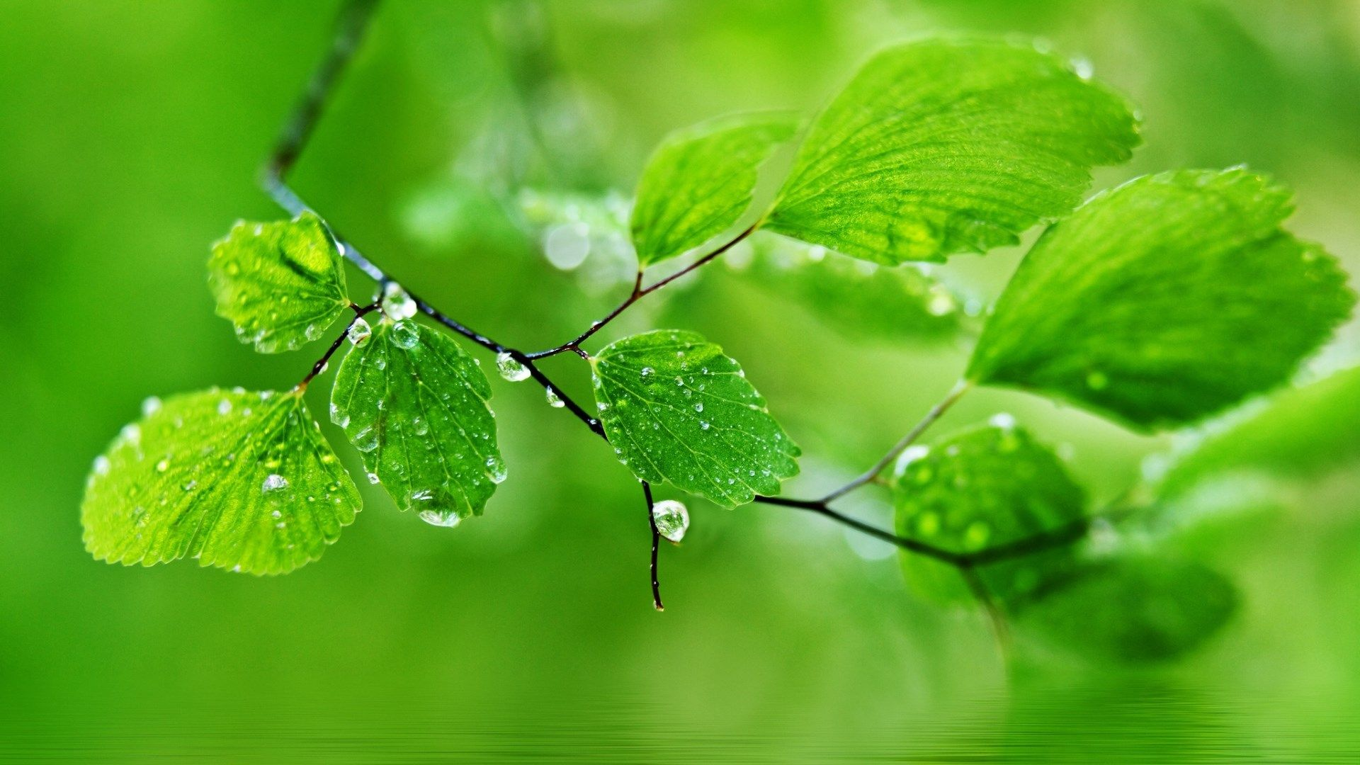 Green Leaf Nature Rain Wallpapers Hd Pictures Desktop Wallpaper Art Desktop Wallpaper Simple Aesthetic Desktop Wallpaper