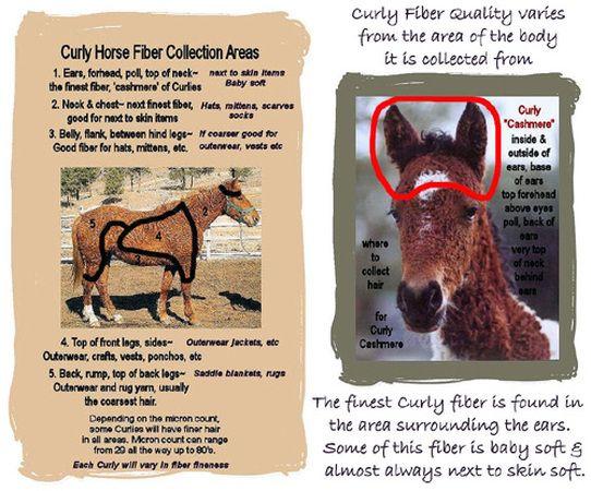 Rump Rugs For Horses