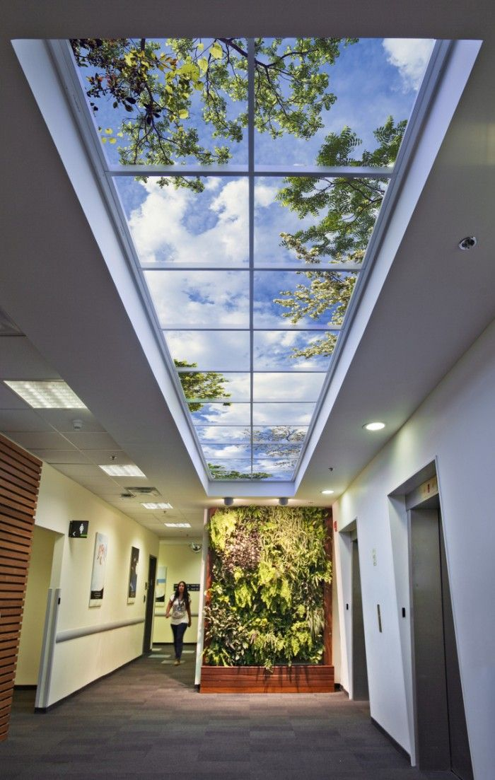 Office Tour: A Brief Introduction to Biophilic Design ...