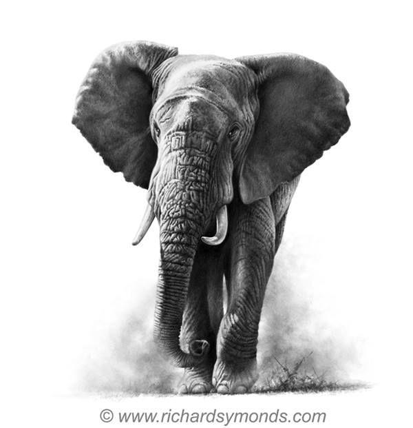 Pin De Mounesh Nandawadgi En Dibujo A Lapiz Elefantes Pintados Elefantes Tatuajes De Elefantes