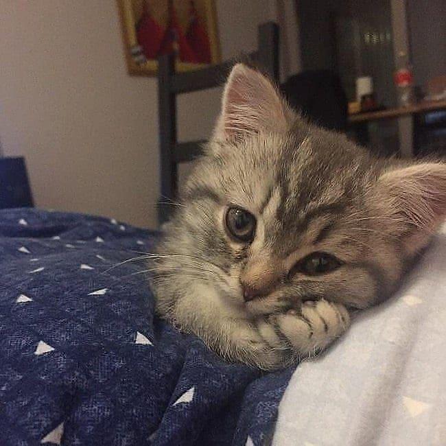 So Cute So Cute Source Katzen Katzenbabys Susseste Haustiere