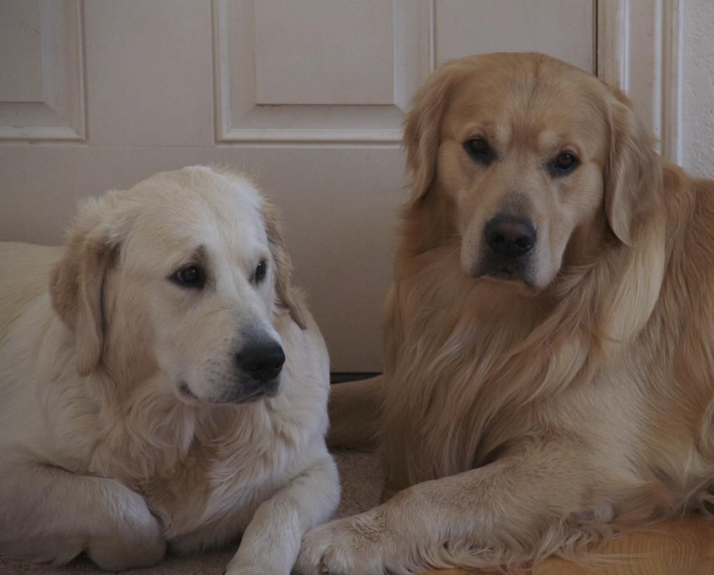 Nocas and William... just hanging out. Best dog breeds