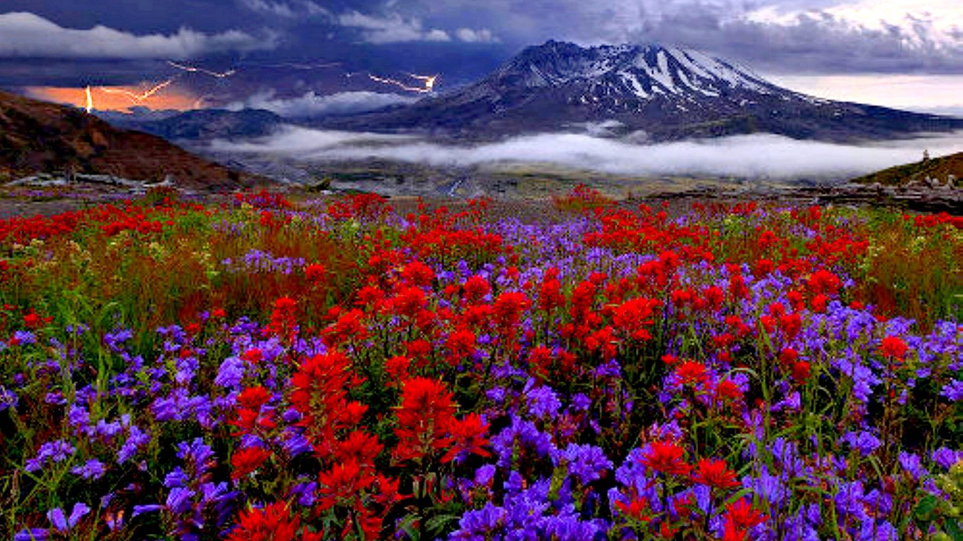 Fields Mountain Flowers Mount Nature Spring HD Background