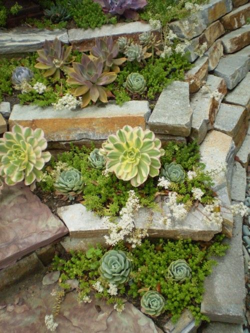 Succulent garden with stones another idea for my front for Succulent rock garden ideas