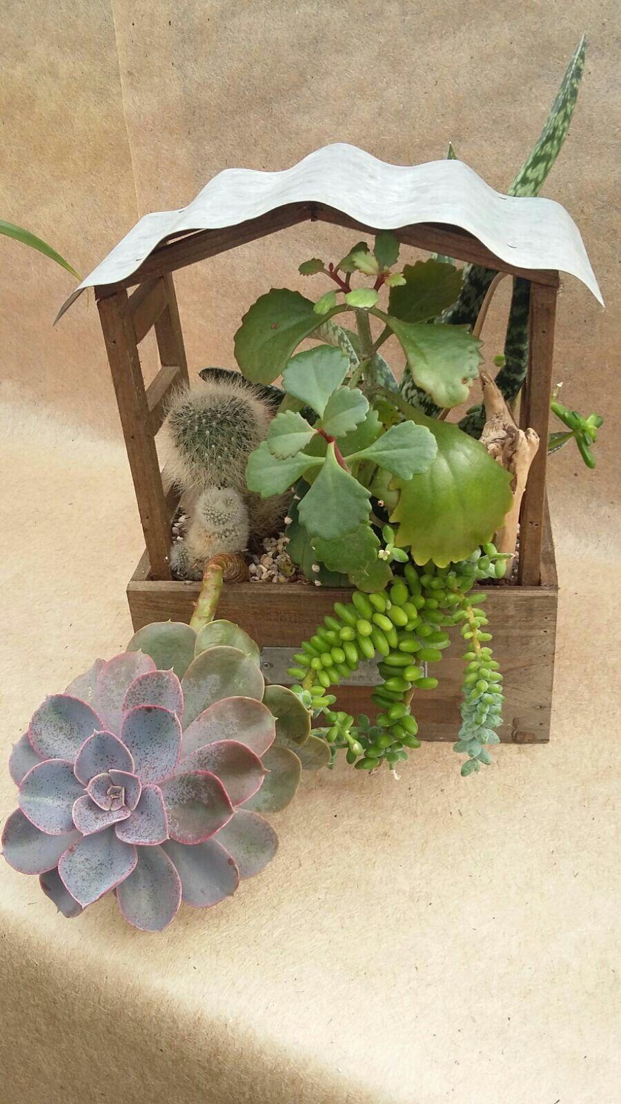 Composizione piante grasse piante grasse pinterest - Composizione piante grasse giardino ...
