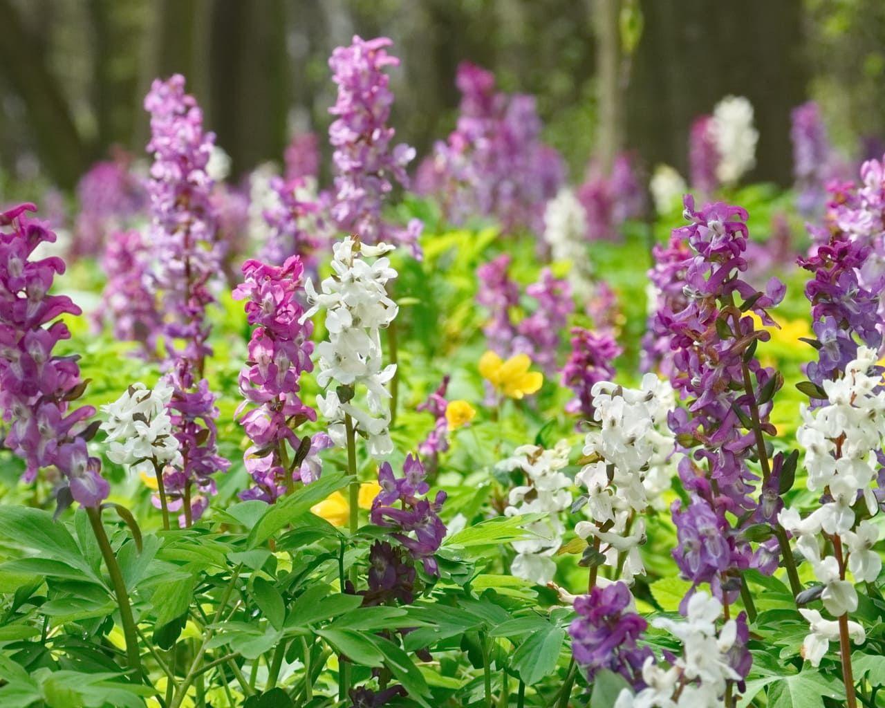 Waldgarten – Pflanzen die im Schatten wachsen – Stilvolles Design – einfach gepflanzt