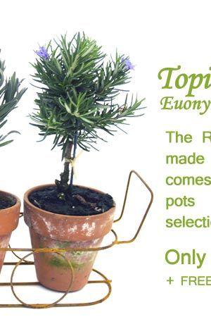 FreshTopiary Herb Garden