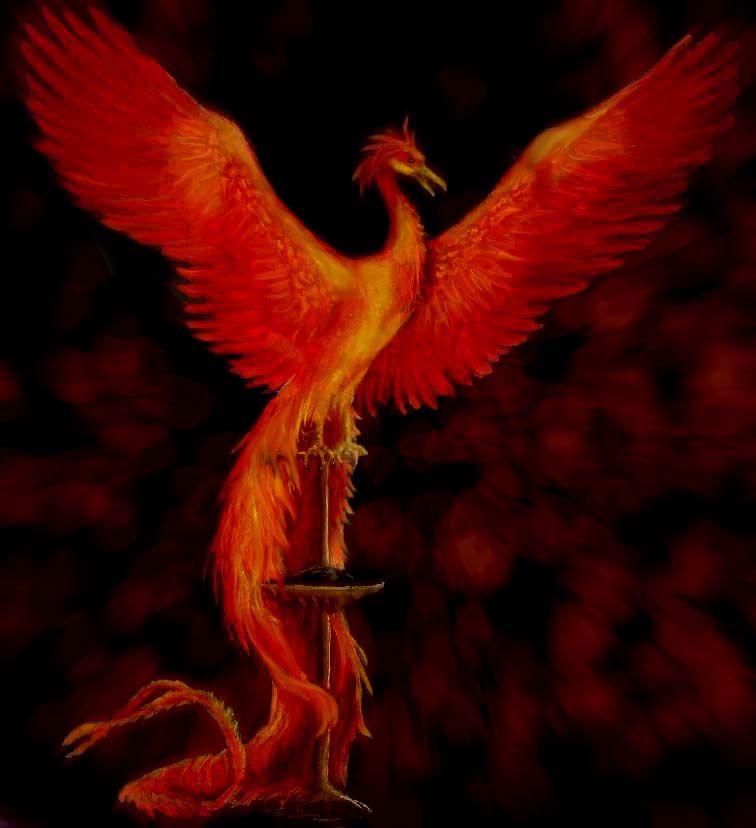 Fawkes The Phoenix Phoenix Harry Potter Harry Potter Colors Harry Potter Quilt