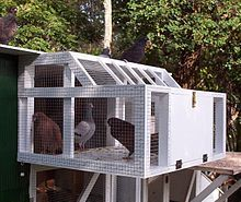 Pigeon keeping - Wikipedia, the free encyclopedia
