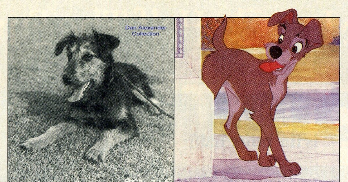 Image Result For Lady And The Tramp Dog Breeds Lady And The Tramp Classic Disney Movies Classic Disney