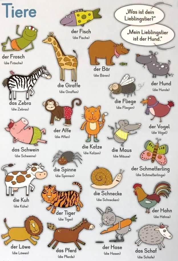 Animals in German Tiere German language learning
