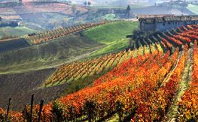 I want to go on a Piemonte Wine Tour
