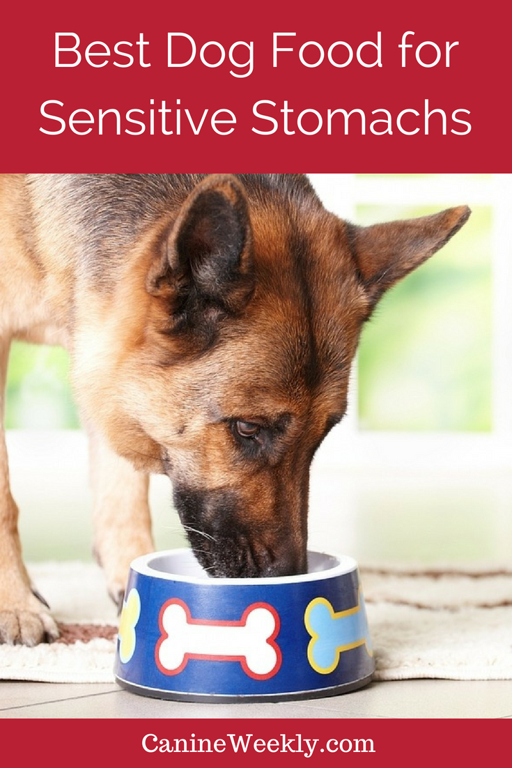 The Best Dog Food For Sensitive Stomach And Diarrhea Dog Nutrition