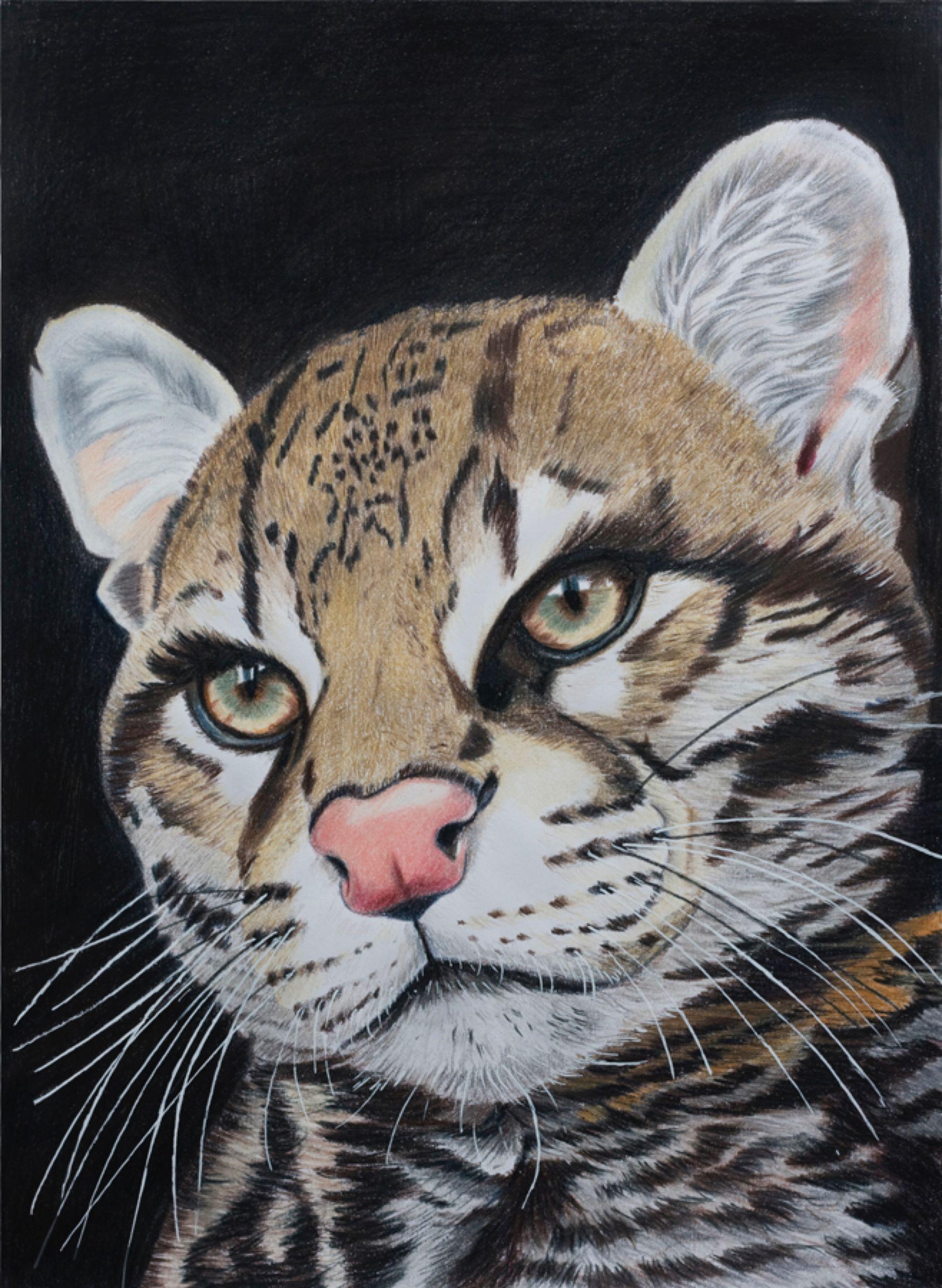 Billy by Sarahharas07 on DeviantArt Art, Wildlife art