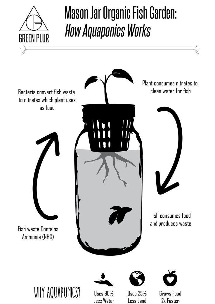 3 Mason Jar Aquaponics Kit  Build Your Own Hydroponics Herb   Etsy