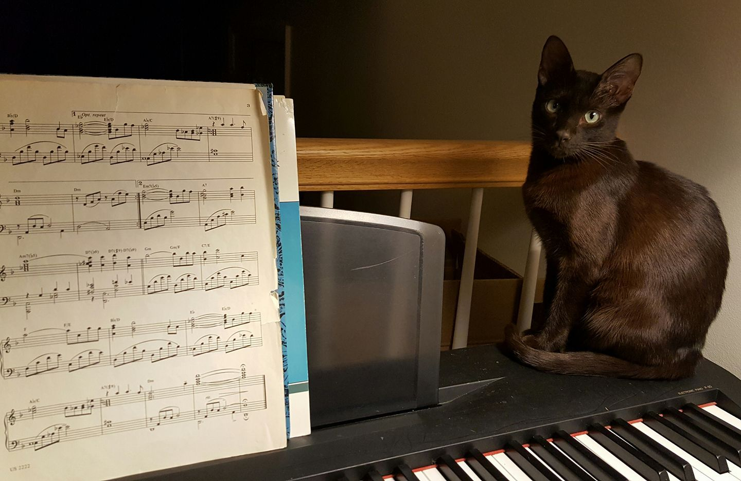 Nutmeg is dark, handsome... AND his human's biggest fan. <3 These sweet kitty loves watching his mom, Linda, play the piano. Congrats little cutie for being a winner in our contest!