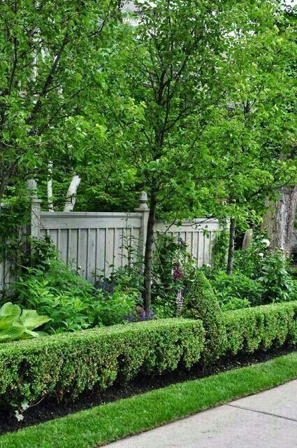 Pin en flores plantas jardines - Setos para vallas ...