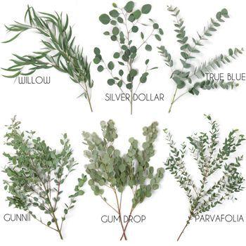 Choose Your Own Eucalyptus Greenery Premium Pack |