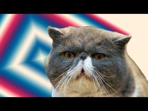 funny cat videos part 2 youtube cats pinterest funny cat