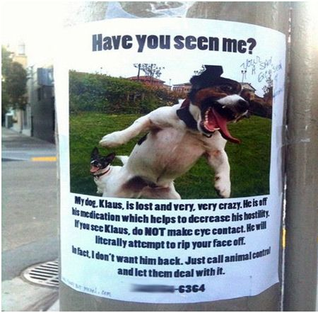 12 Funniest Lost Found Pet Signs