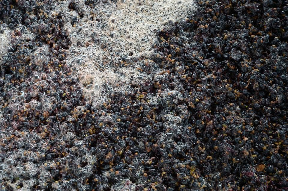 Promiscuity In The Wine Cellar Pays Off - Forbes#4654e1612fa8#4654e1612fa8#4654e1612fa8 #WineCellar #WineYeast