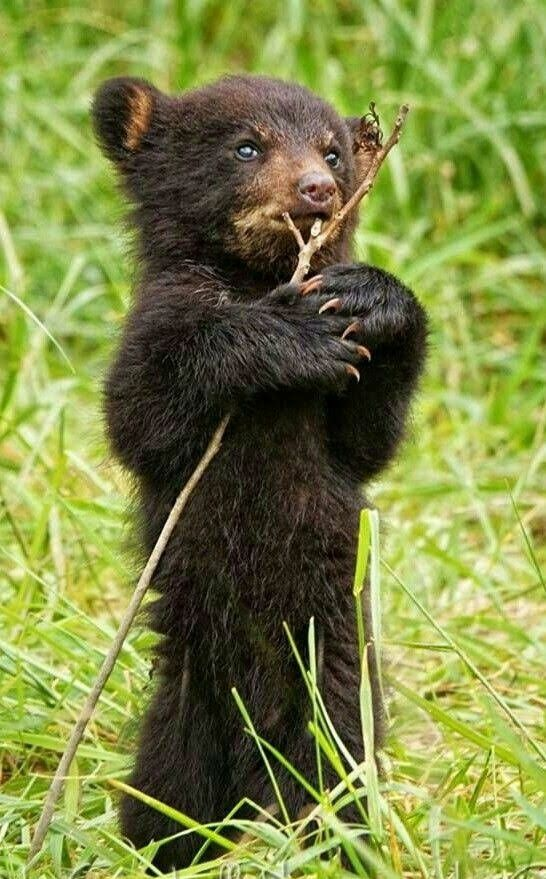 Adorable baby cub will try anything ❣