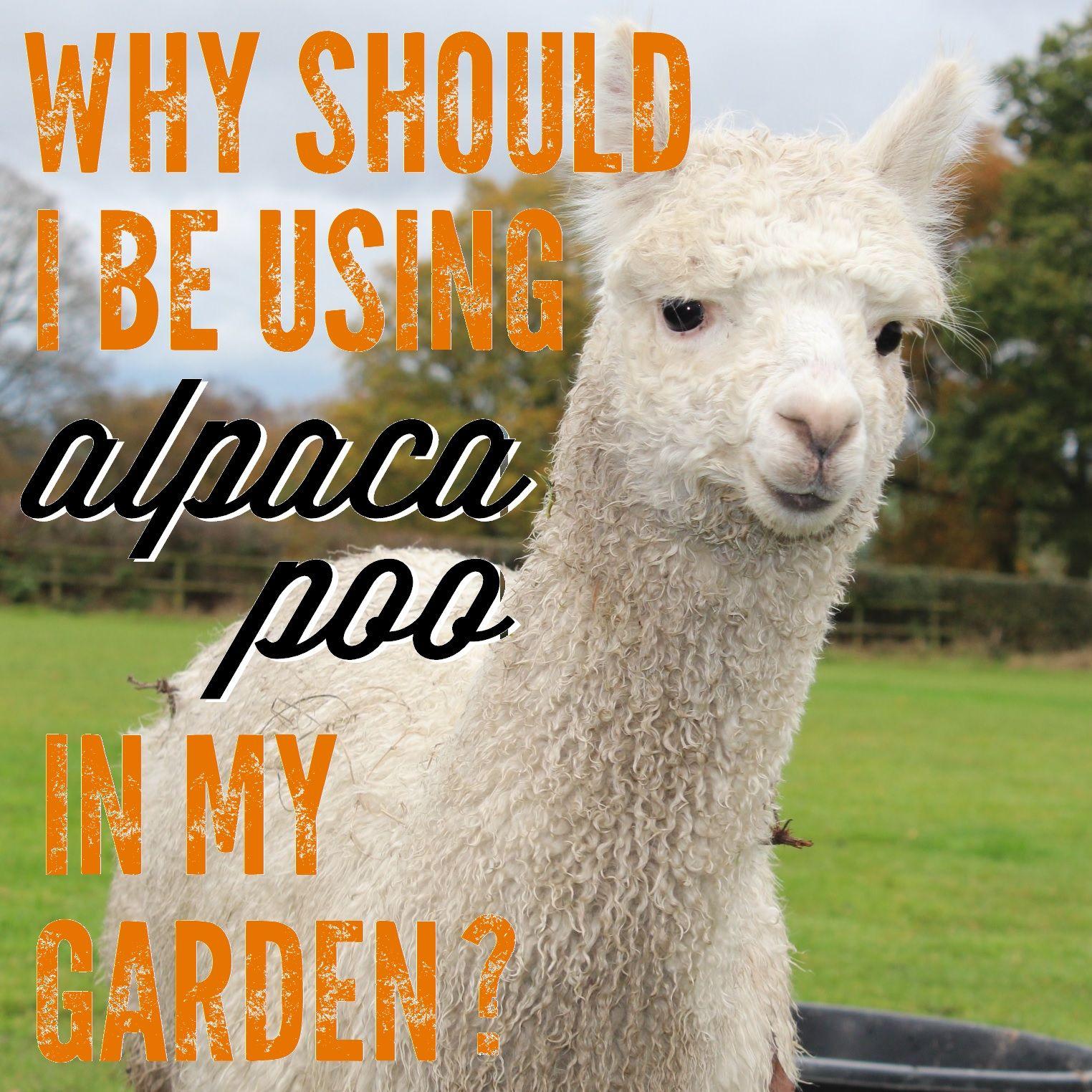 Why Should I Be Using Alpaca Poo In My Garden Alpaca Alpaca Farm Backyard Farming