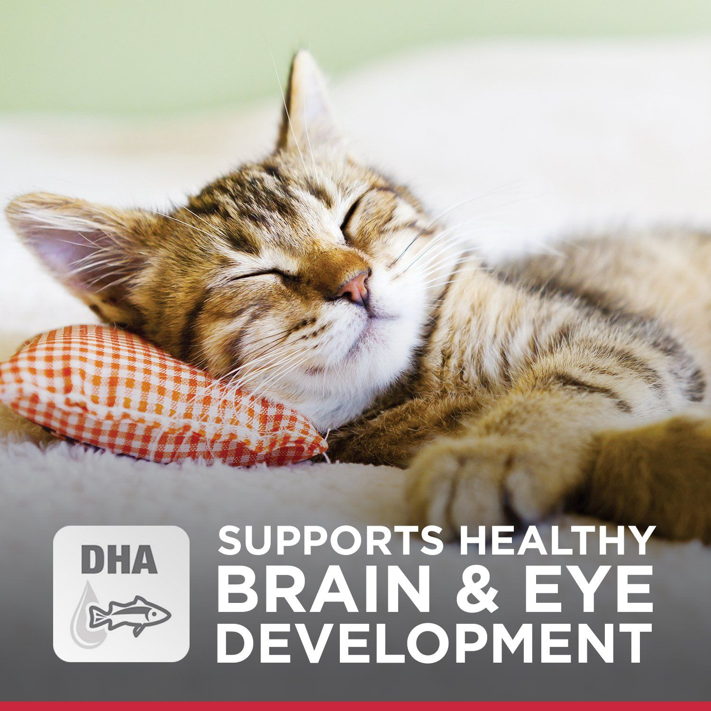 Hills science diet kitten food healthy development chicken