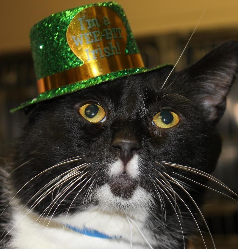 Adopt JASON on Cats, kittens, Animal shelter, Animals