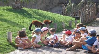 Los zoológicos donde predominaban las jaulas son cada vez menos, hoy en día ya hay muchas opciones donde los animales viven en espacios similares a su medio natural y los visitantes pueden interactuar con ellos.