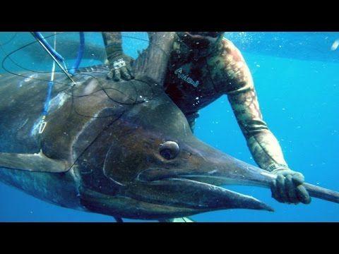 Blue Water Spearfishing Pesca Sub, com Diego Santiago - YouTube ...