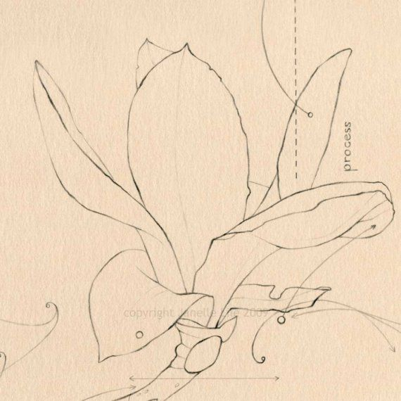 Magnolia Flower Pencil Line Drawing Reproduction By Janellelile 28 00 Line Drawing Drawings Doodle Drawings