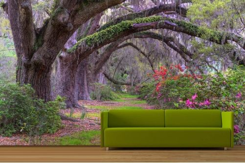 Feature Wall Thoughts Forest Wallpaper Enchanted Forest Mural Forest Wall Mural