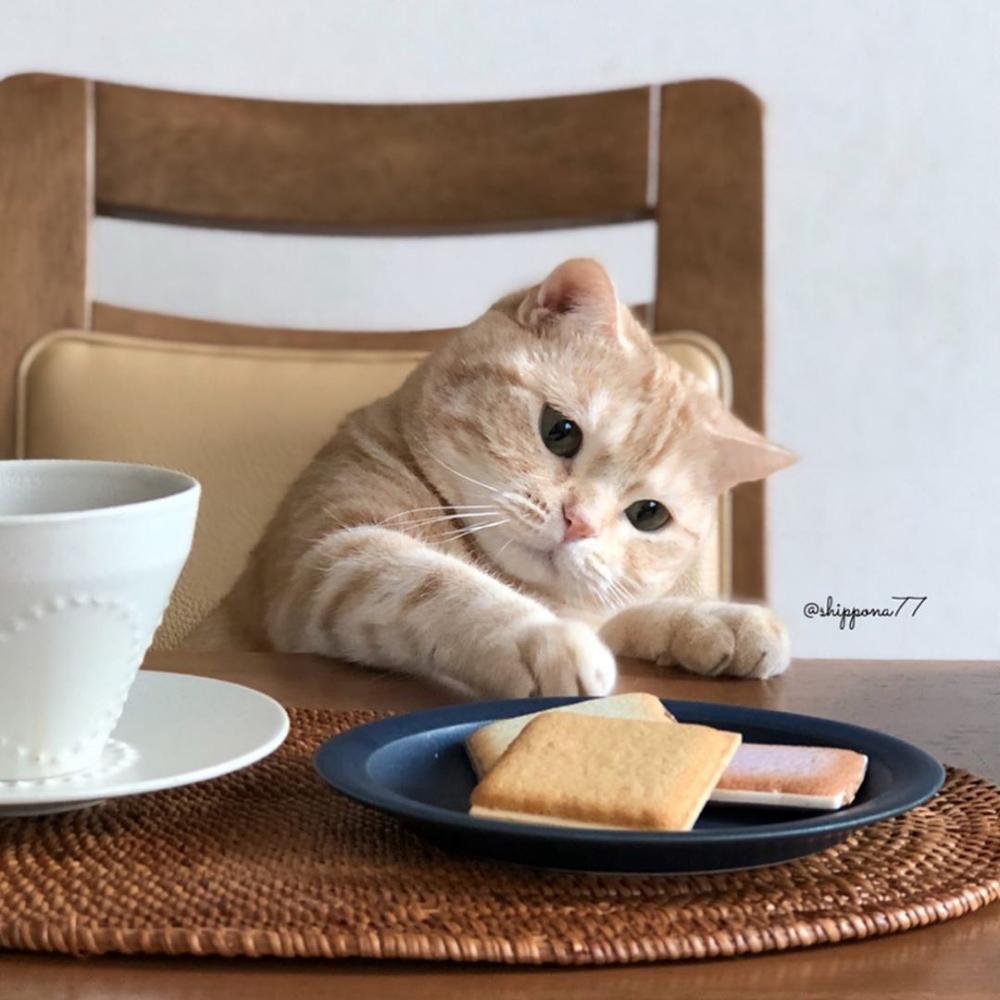 【8月8日は世界猫の日】ニャンとも癒やされる! #猫とごはん のある風景 part2 | #おうちごはん