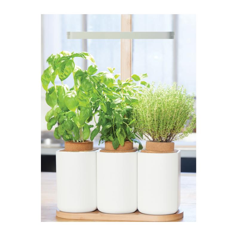 lilo est votre potager d 39 int rieur pour faire pousser trois plants d 39 herbes aromatiques toute l. Black Bedroom Furniture Sets. Home Design Ideas