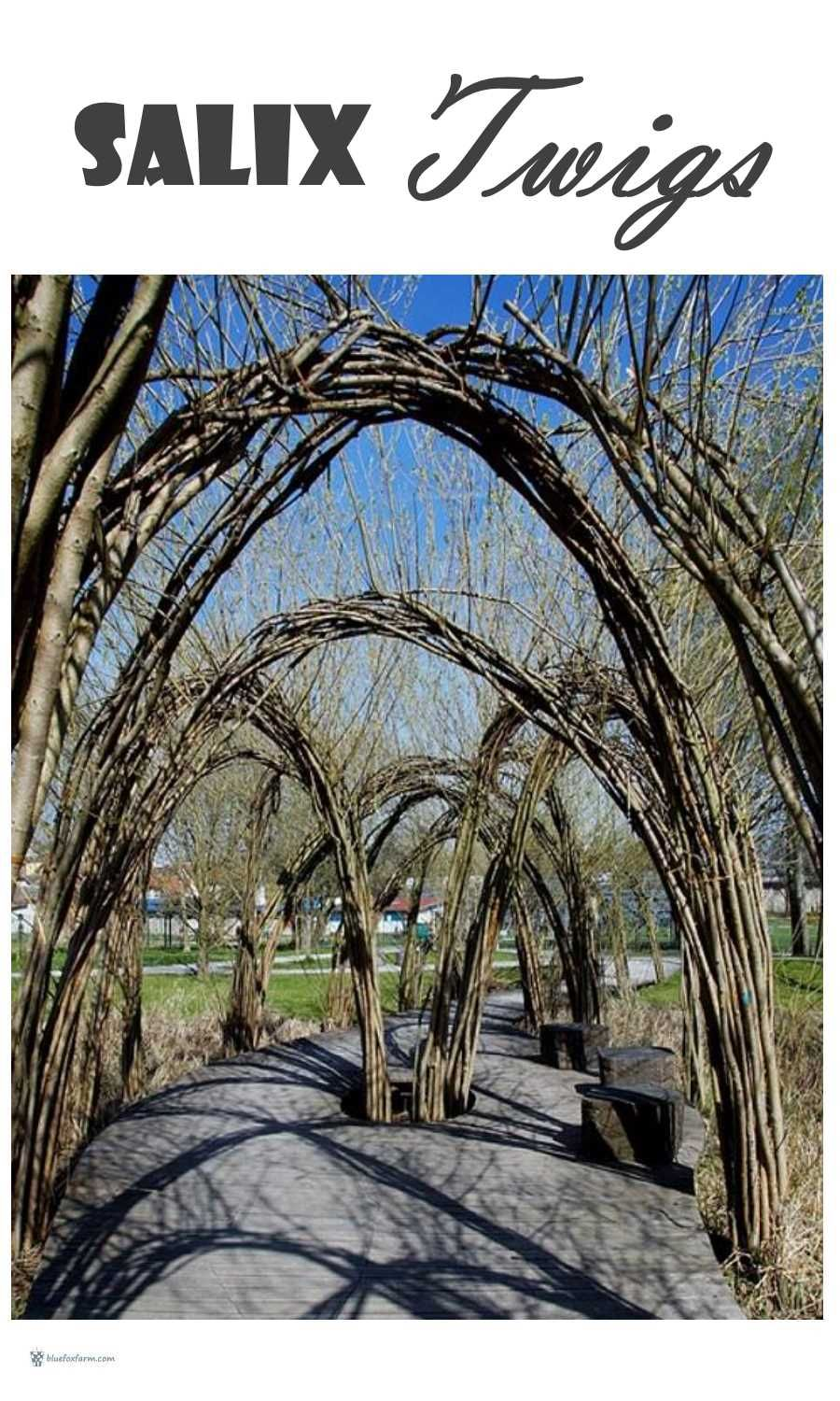 Salix Twigs; the incomparable Willow for crafts (With ... on Blue Fox Outdoor Living id=35175
