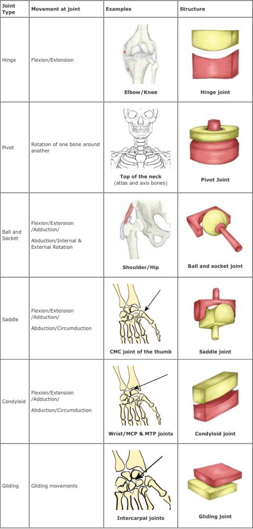 joints. - Infogram, charts & infographics | Human Body | Pinterest