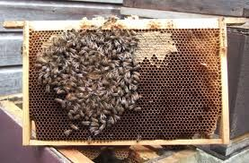Image result for bee hive base